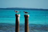 Dois pássaros, dois postes, Los Roques, 2009