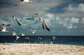 Aves, Los Roques, 2009