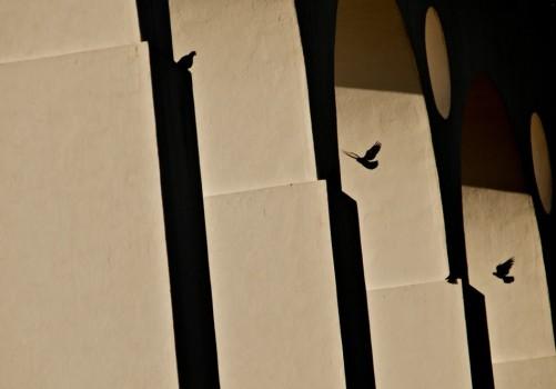 Os Arcos da Lapa e seus pombos. 2011.
