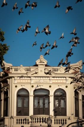 Pombos na Lapa, Centro, 2011